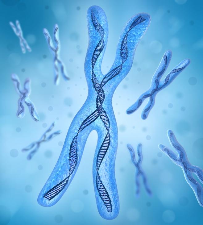 telomere.jpg