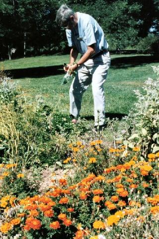 volunteer-gardener-1508838.jpg